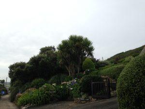 Vorgärten oberhalb Praa Sands Beach Cornwall