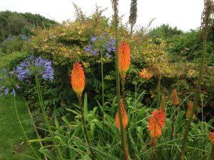 Pflanzenpracht in Cornwall