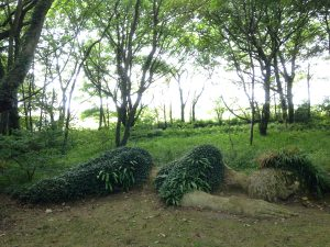the-lost-gardens-of-heligan-in-suedengland-01