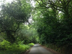 the-lost-gardens-of-heligan-in-suedengland-06