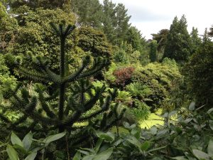 the-lost-gardens-of-heligan-in-suedengland-10