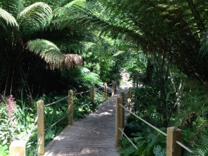 the-lost-gardens-of-heligan-in-suedengland-12