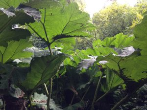 the-lost-gardens-of-heligan-in-suedengland-13