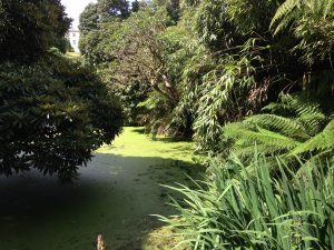 the-lost-gardens-of-heligan-in-suedengland-14