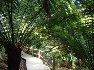 the-lost-gardens-of-heligan-in-suedengland-15