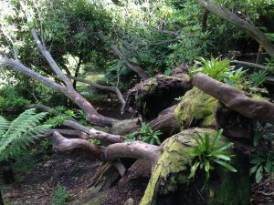 the-lost-gardens-of-heligan-in-suedengland-16