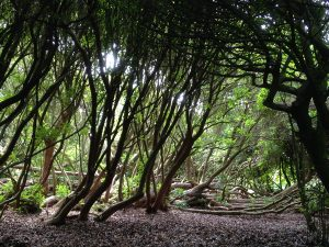the-lost-gardens-of-heligan-in-suedengland-25