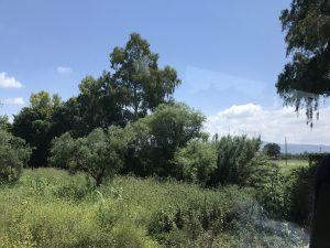 Grüne Landschaft auf Peloponnes