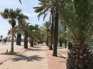 Palmenallee am Platja Bogatell Barcelona