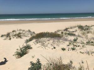 Blick über die Dünen Playa La Barrosa