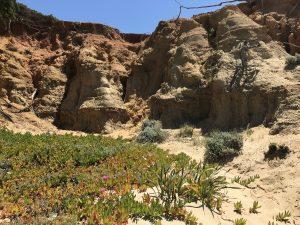 Fels- und Dünenlandschaft mit prächtigen Pflanzen La Roche