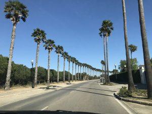 Palmengesäumte Straße in Chiclana de la Frontera